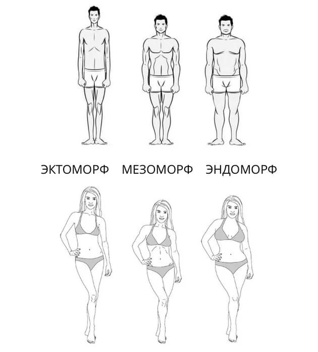 ectomorph Plural of ectomorph  definition from wiktionary, the free dictionary.